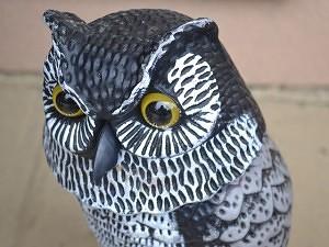 ... Owl Decoy For Bird Control