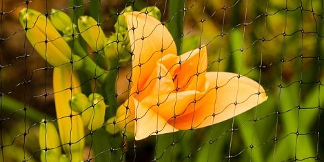 plant netting bird protection