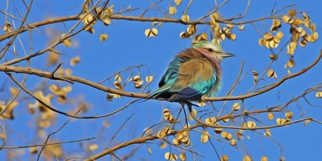 The Best Bird Control Products for Spring