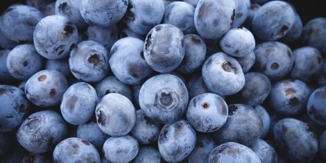 Blueberry Bush Bird Protection Tips for Farmers