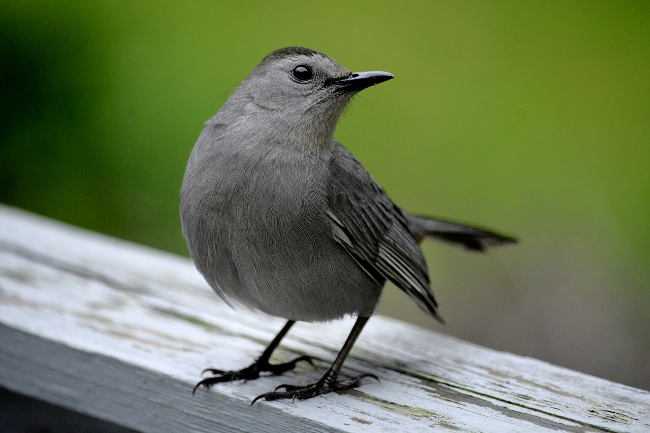 Safe Ways to Keep Birds Away From the Patio, Porch and Deck - Safe Ways To Keep Birds Away From The Patio, Porch And Deck