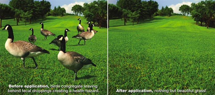 avian-migrate-before&after
