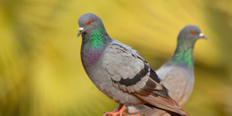 Latest News For Growers Businesses Avian Control