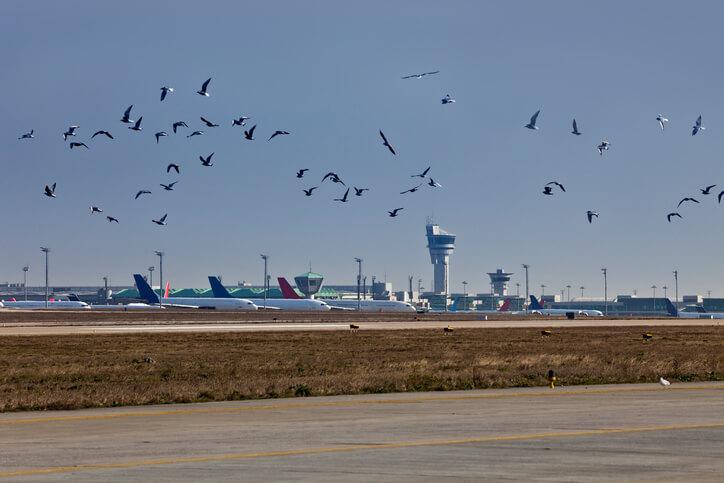 Bird in Airport