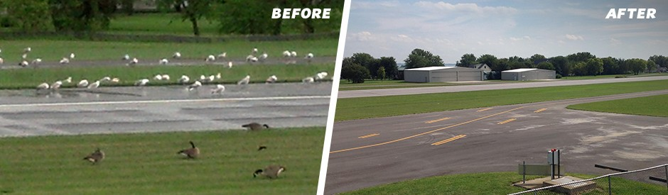 before and after bird control