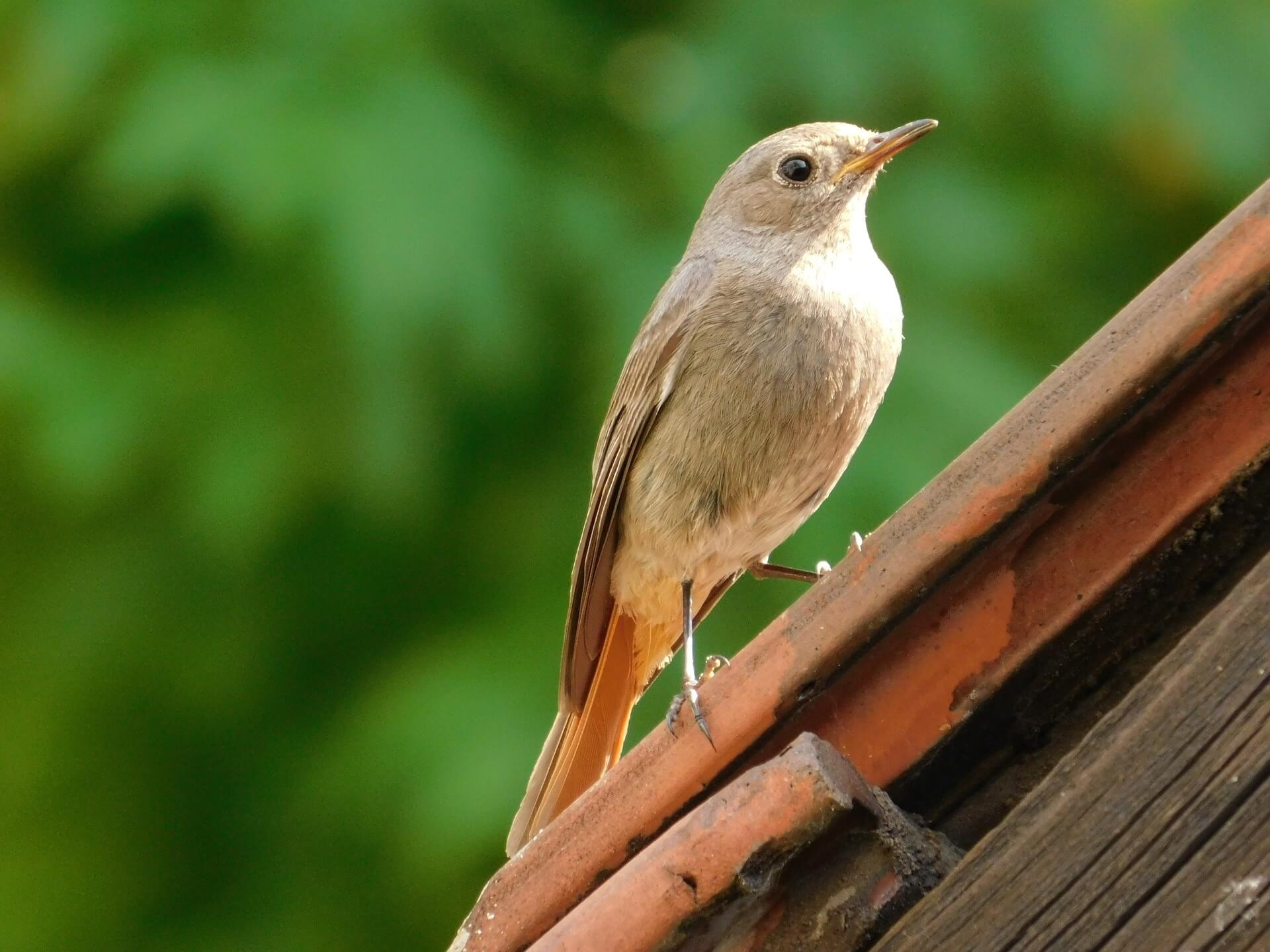 How To Get Rid Of Birds On Your Roof