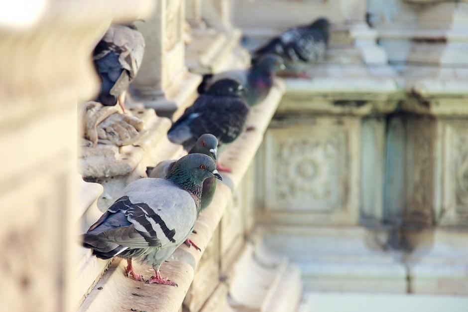 Pigeon Problem- AC