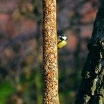 bird-636548_1280