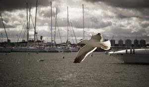 harbor bird control