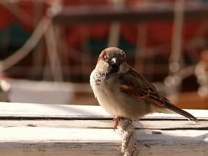 marina bird control