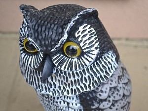 owl decoy for bird control