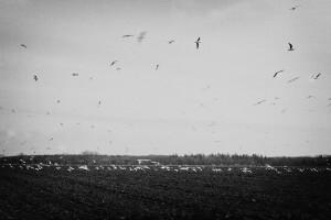 bird control for farms