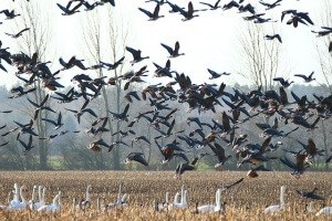 Best Bird Control Products for Spring | How to Repel Birds