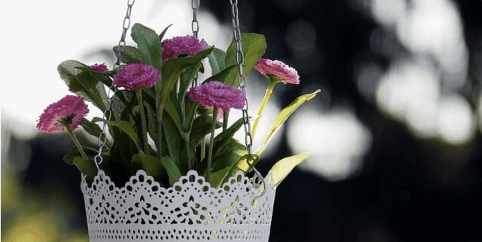 How to Bird proof Hanging Baskets Around the Home