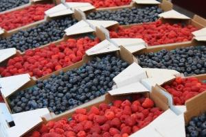 Blueberry Farm Bird Protection Tips
