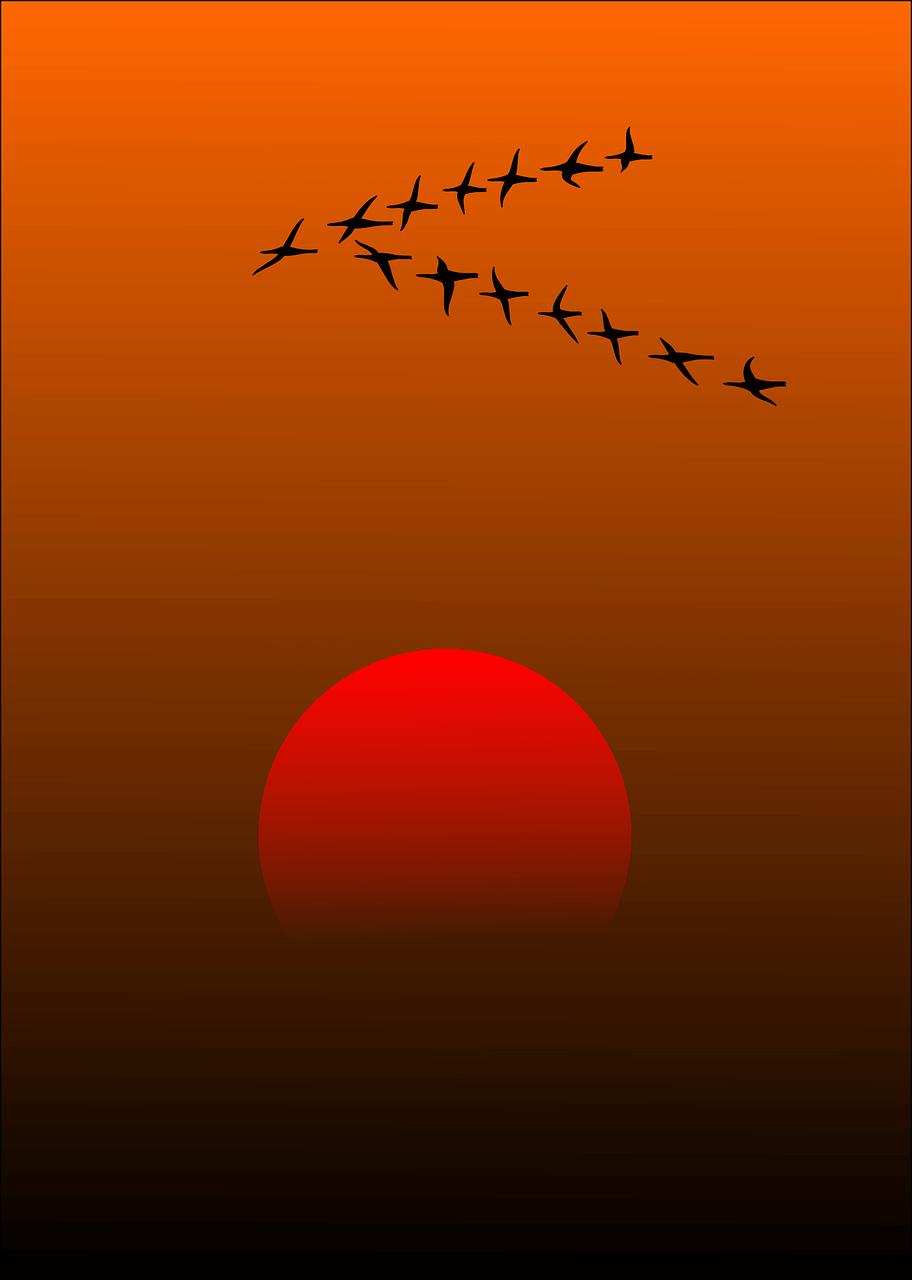 migratory-birds-157638_1280