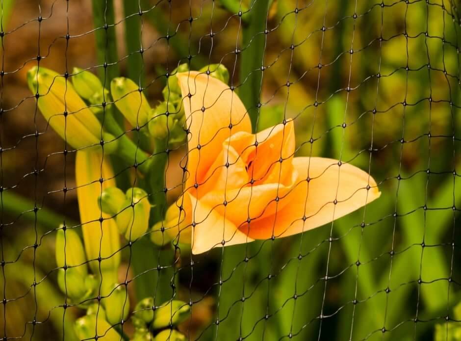 bird netting