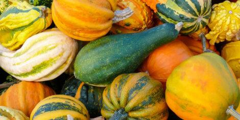 Pumpkins and Gourd Harvest
