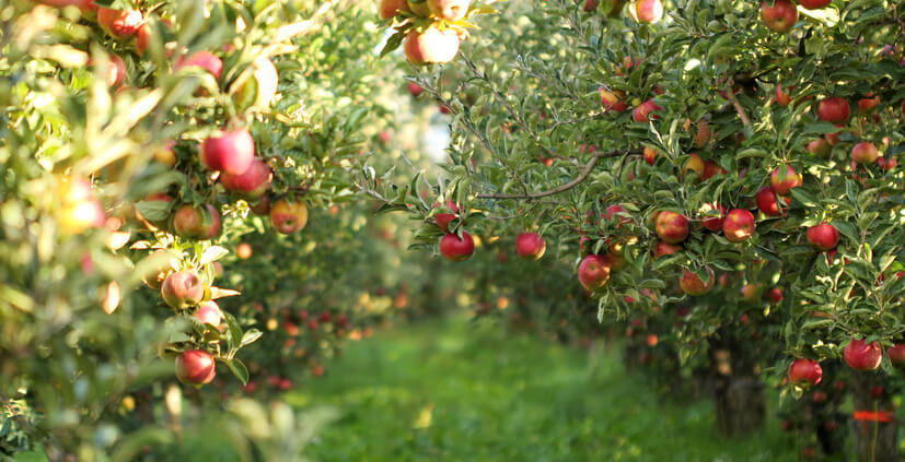 How To Prevent Birds From Damaging Your Apple Trees