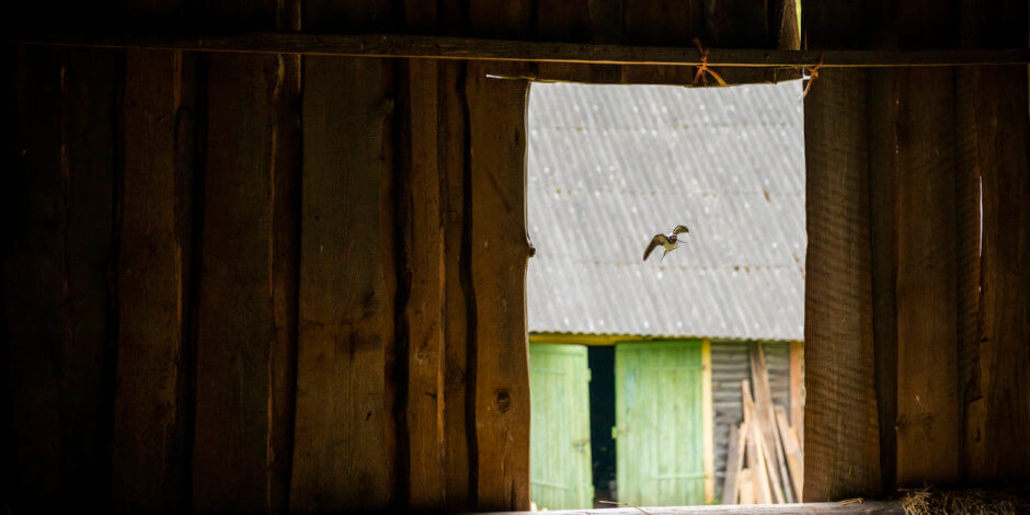birds in barn