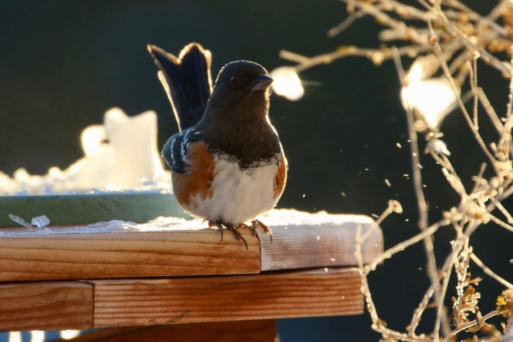Utilizing Bird Repellent To Keep Birds And Pests Away From ...