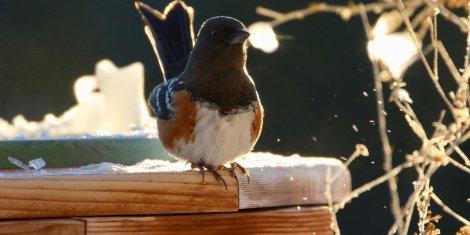 bird on a wooden ledge
