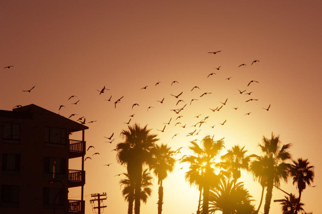 Palm Trees And Birds Against The Sunset