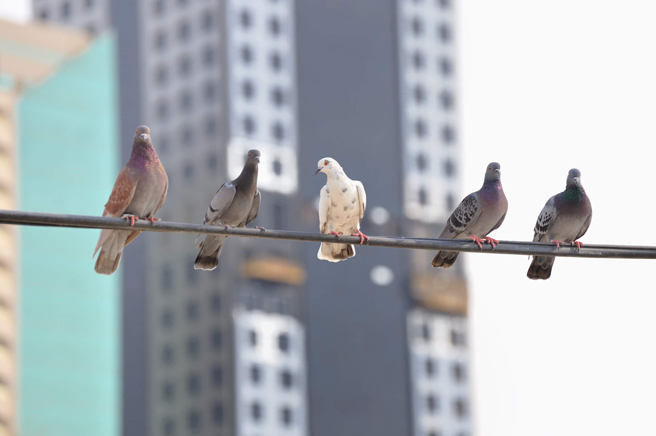 Protect Your Outdoor Apartment Areas from Bothersome Birds