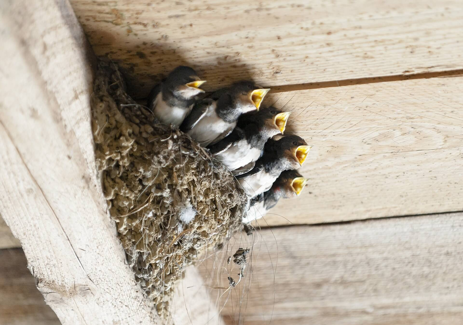 Utilizing Bird Repellent To Keep Birds And Pests Away From