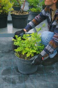 gardener moving potted plants