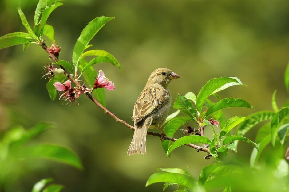 Bird on plants without bird netting